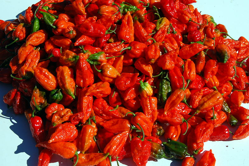 Dorset Naga chillies
