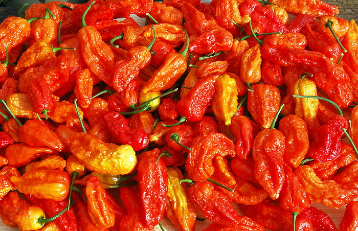 Fresh Bengal Naga chillies
