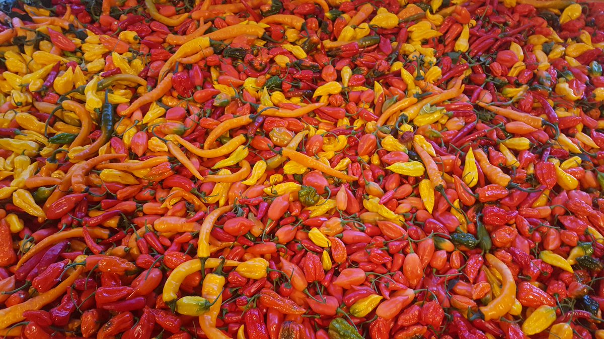 fresh chillies from dartmoor chilli farm