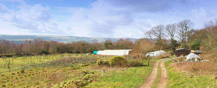dartmoor chilli farm