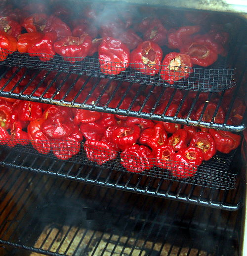 Smoking Jamaican Red chillies