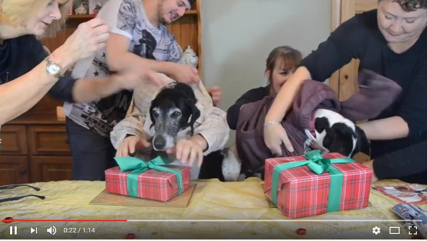 #dogswithpresents bloopers