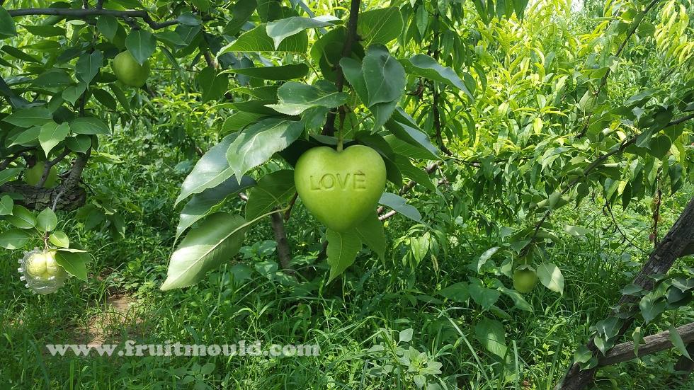 heart apple mold with  u0026quot love u0026quot